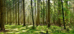 [보도] 효율적 목재생산 및 이용을 통해 산림자원 순환경제 구축해야