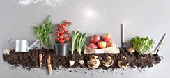 [보도] 2020년 신선편이 과일‧채소 시장 1조원 돌파, 안정적 공급체계 필요