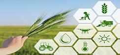 [보도] 농촌 특성을 반영한 저밀도 경제기반 산업육성정책 추진 필요