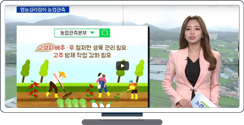 [영농길라잡이 농업관측] 엽근채소, 양념채소 9월 관측